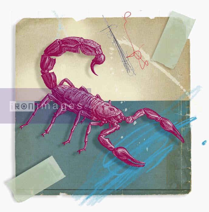 Montage of zodiac Scorpio - Montage of zodiac Scorpio - Matt Herring