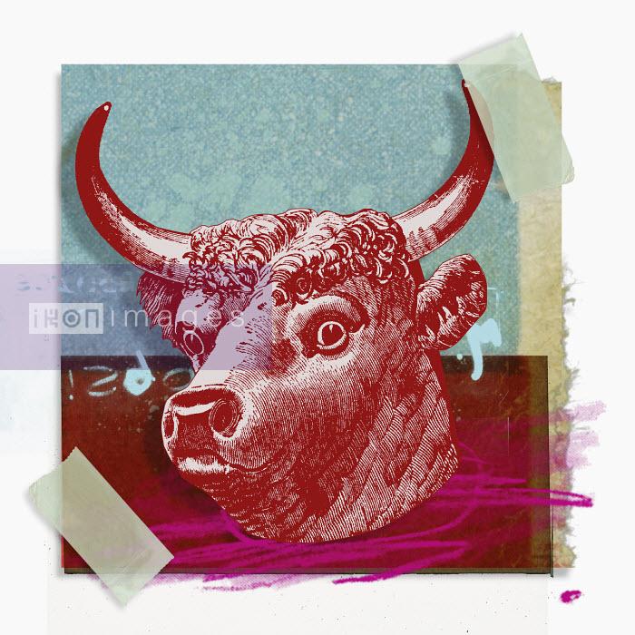 Montage of zodiac Taurus - Montage of zodiac Taurus - Matt Herring