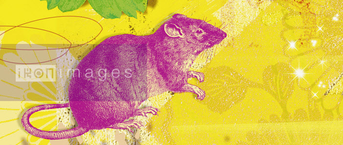 Montage of the Chinese year of the Rat - Montage of the Chinese year of the Rat - Matt Herring