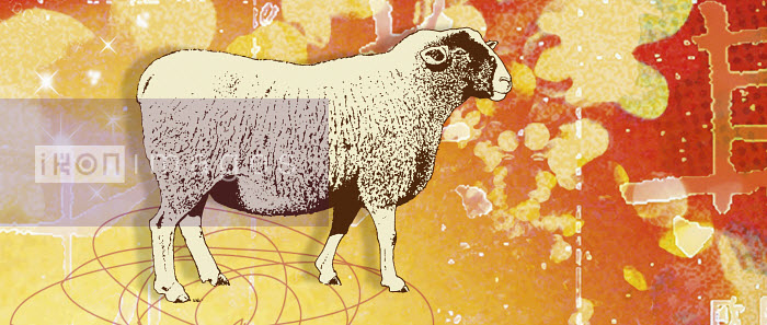 Montage of the Chinese year of the Sheep - Montage of the Chinese year of the Sheep - Matt Herring