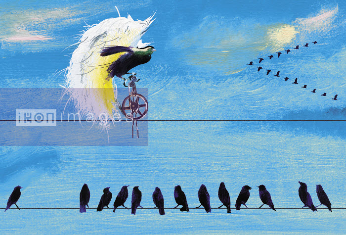Birds on telephone wire watching exotic bird rice unicycle - Birds on telephone wire watching exotic bird rice unicycle - Jo Empson