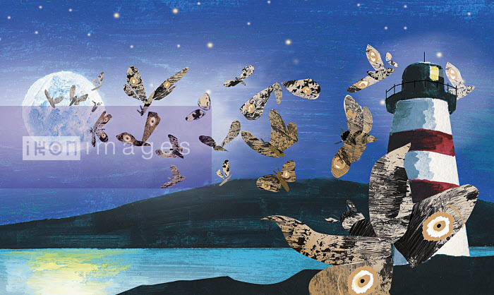 Moths attracted to full moon - Moths attracted to full moon - Jo Empson