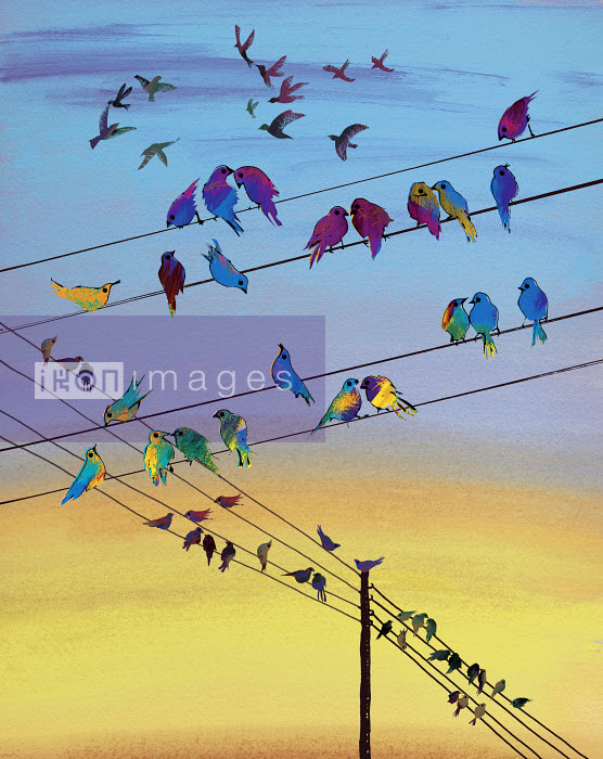 Birds perching on telephone wire - Birds perching on telephone wire - Jo Empson