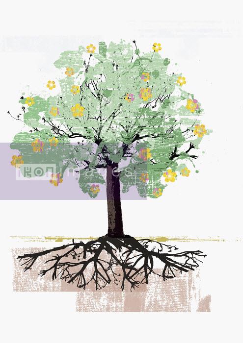 Blooming tree and roots - Blooming tree and roots - Sarah Jones