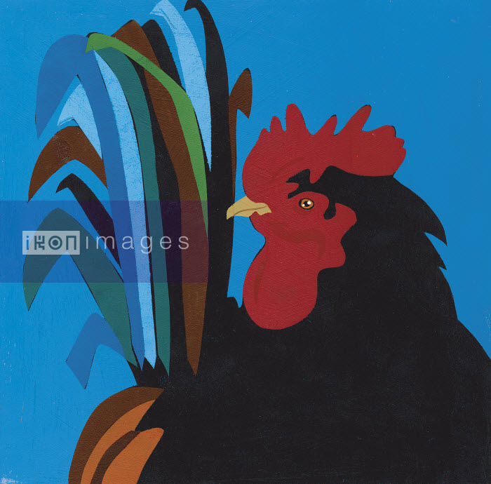 Portrait of rooster - Portrait of rooster - Andy Bridge