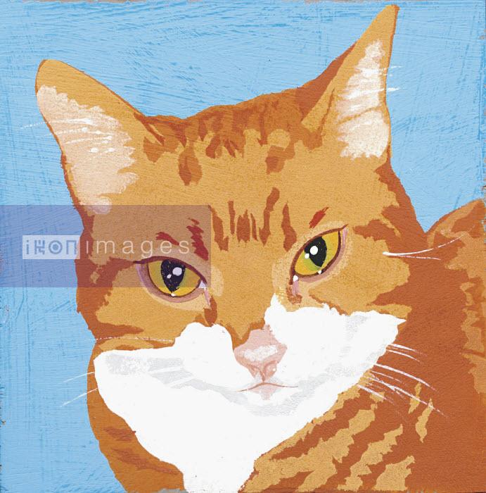 Portrait of orange cat - Portrait of orange cat - Andy Bridge