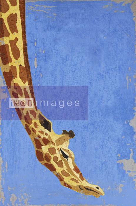 Giraffe leaning down - Giraffe leaning down - Andy Bridge