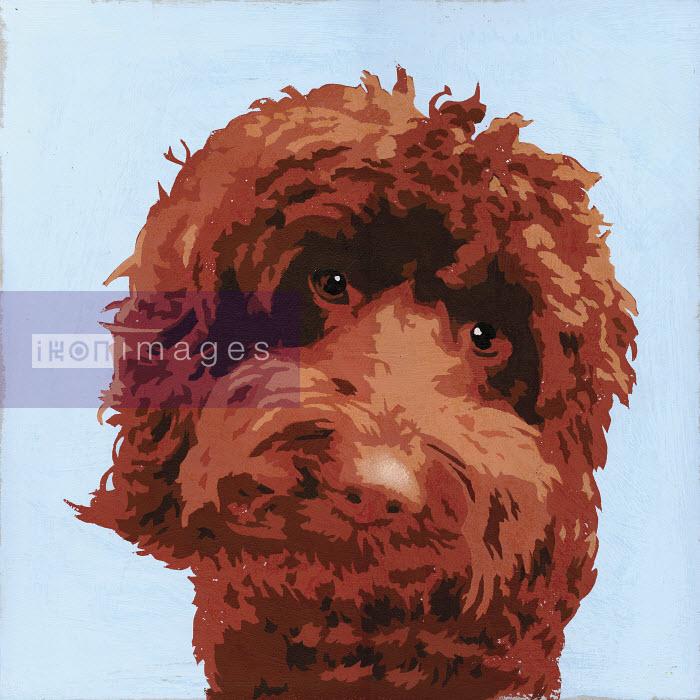 Painting of brown Barbet dog - Andy Bridge