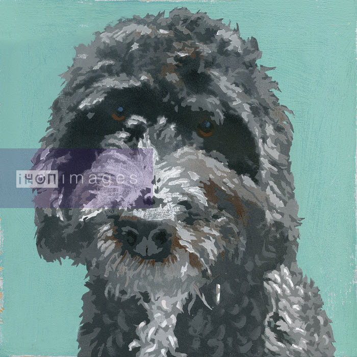 Painting of gray Barbet dog - Andy Bridge