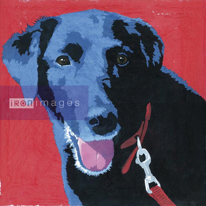 Painting of black Labrador dog - Andy Bridge