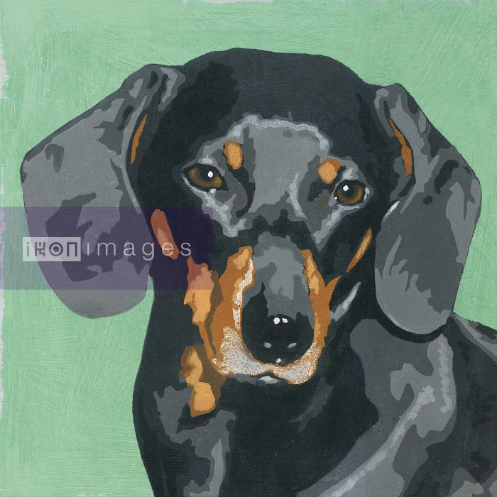 Painting of Dachshund dog - Andy Bridge