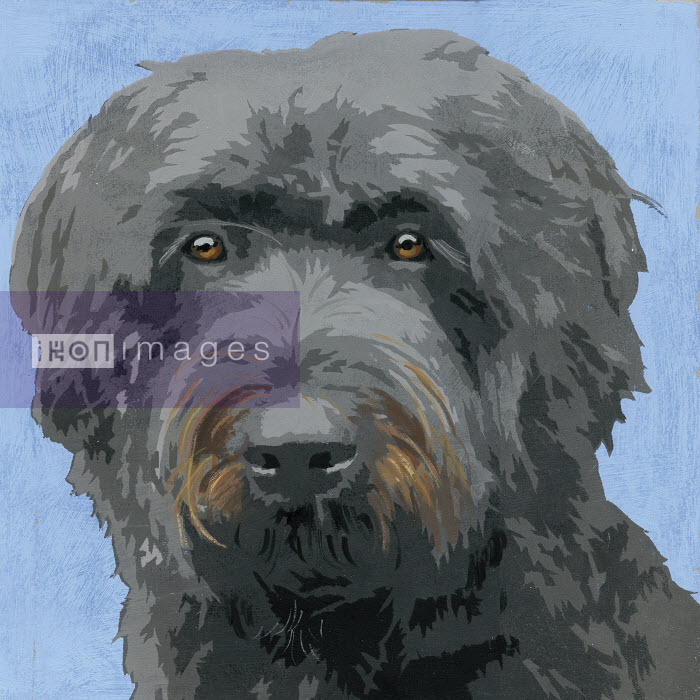 Painting of Bouvier Des flandres dog - Andy Bridge