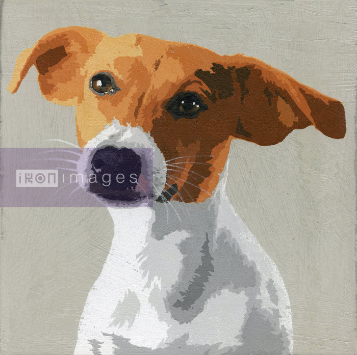 Portrait of Jack Russell Terrier dog - Andy Bridge
