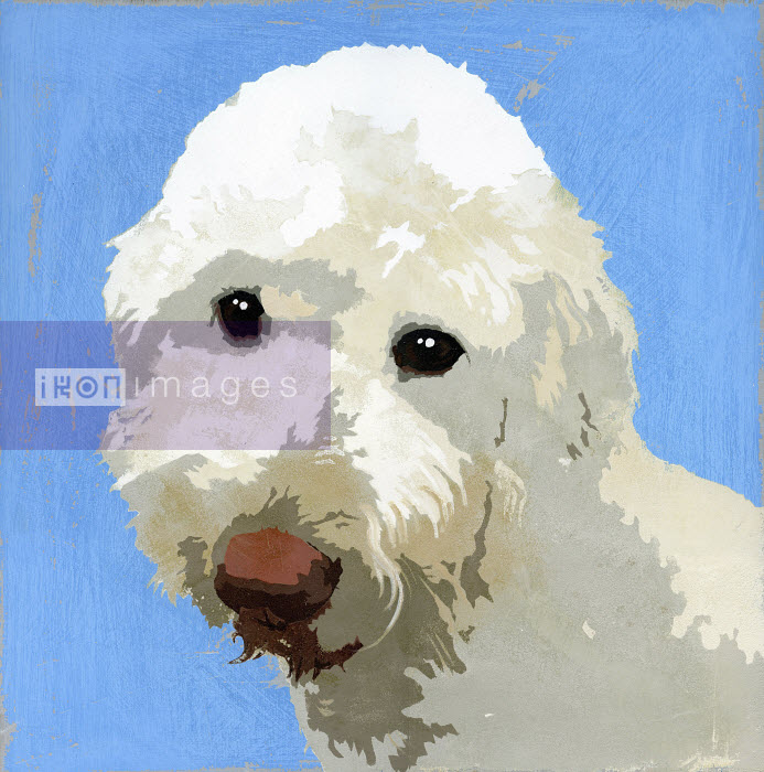 Painting of Labradoodle dog - Andy Bridge
