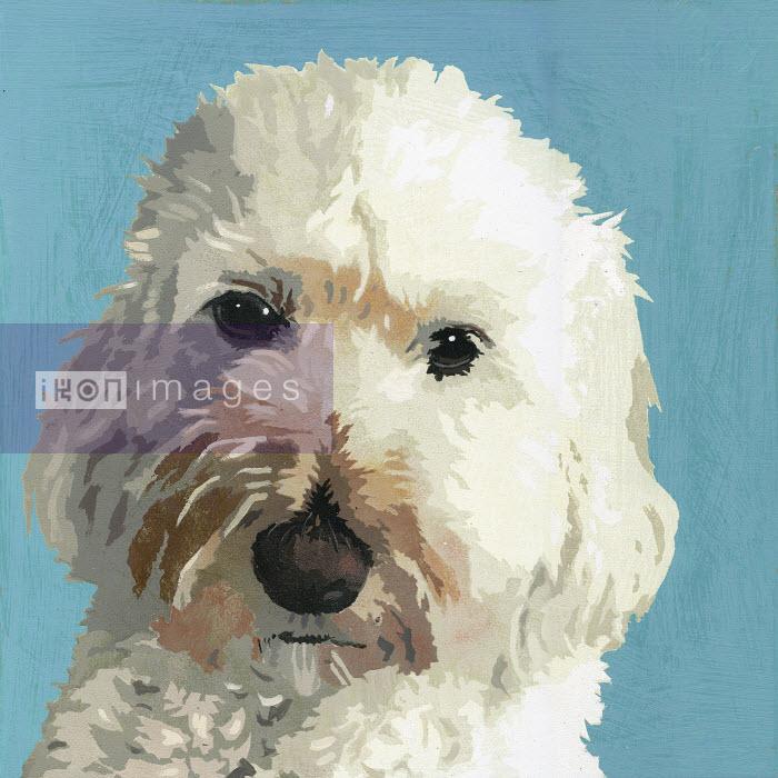 Painting of Cockapoo dog - Andy Bridge