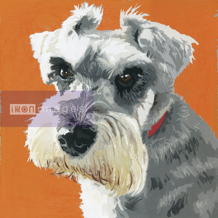 Painting of Miniature Schnauzer dog - Andy Bridge
