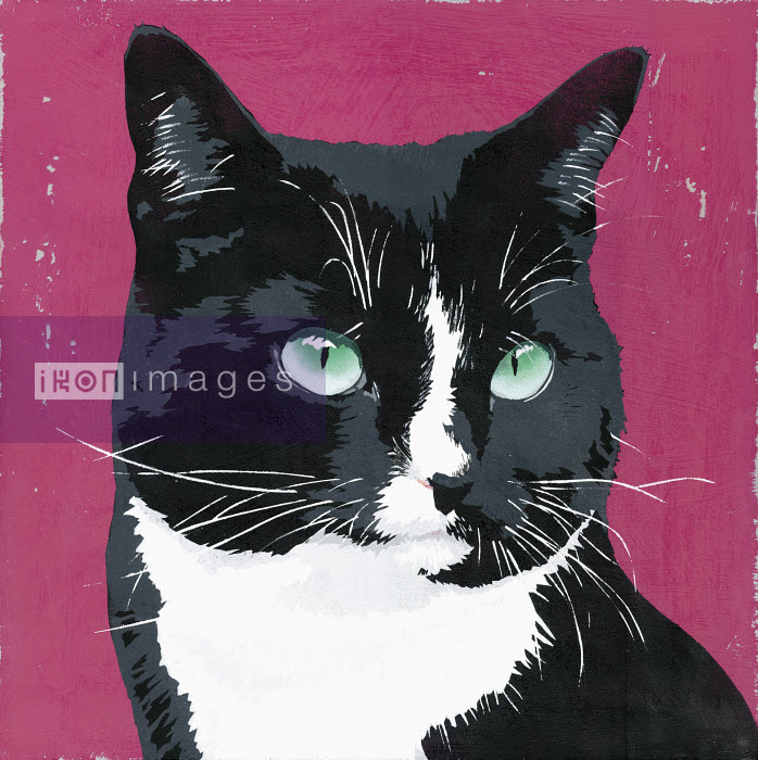 Painting of black and white cat - Andy Bridge