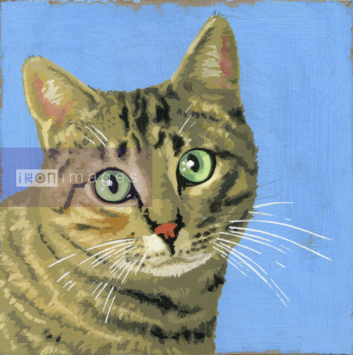 Portrait of tabby cat - Andy Bridge