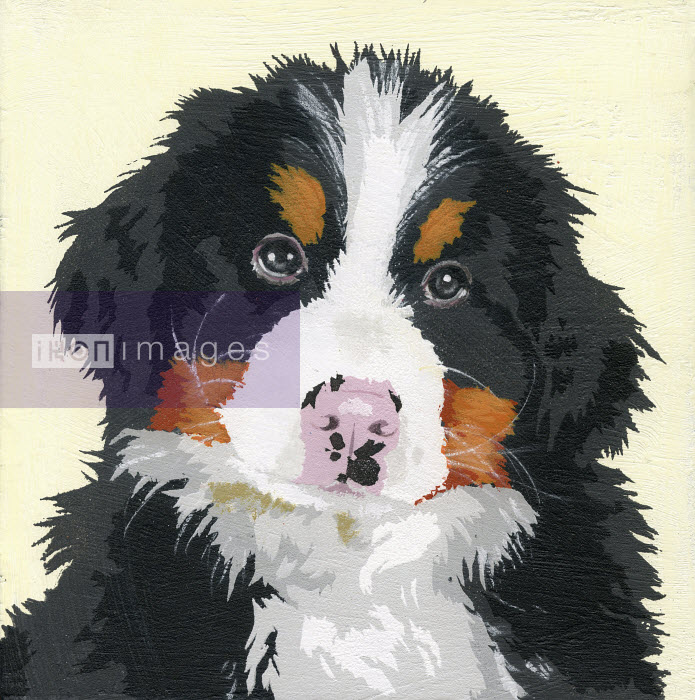 Portrait of Bernese Mountain Dog puppy - Andy Bridge