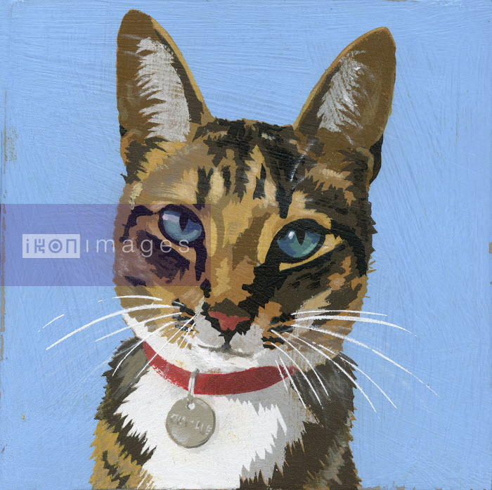 Portrait of cat wearing collar and name tag - Andy Bridge