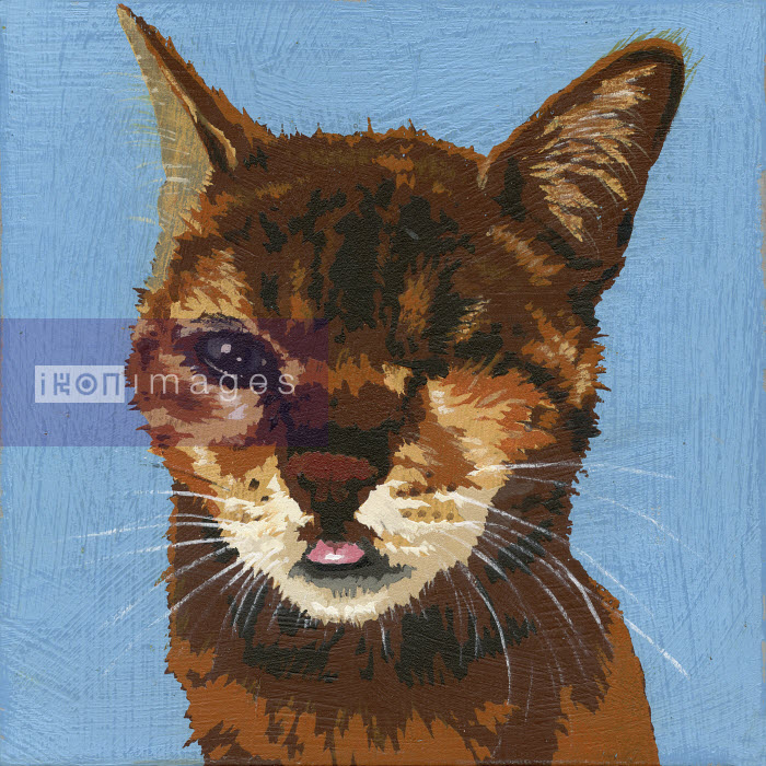 Portrait of cat with blind eye - Andy Bridge