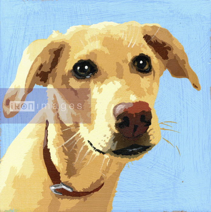 Portrait of Yellow Labrador dog - Andy Bridge