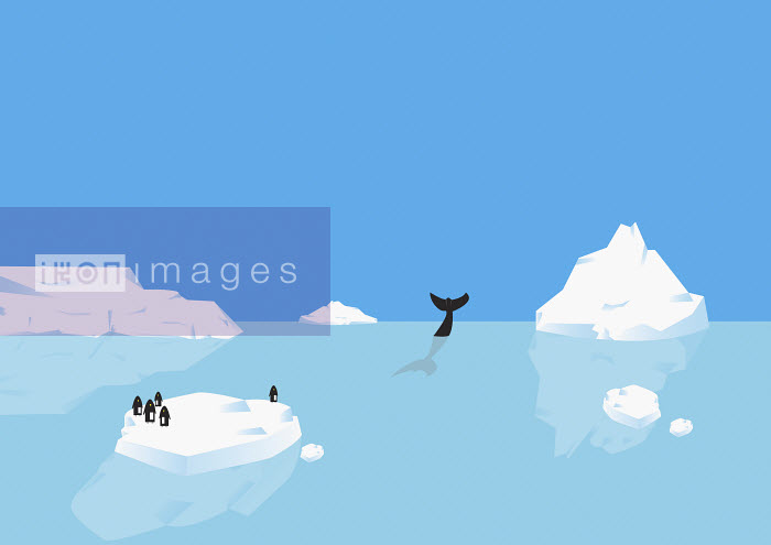 Penguins standing on iceberg, whale diving in distance - Penguins standing on iceberg, whale diving in distance - Oscar Armelles