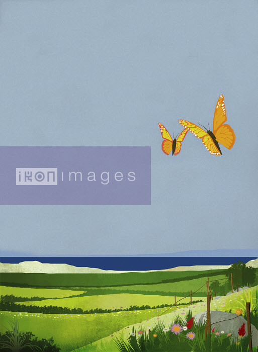 Butterflies fluttering over rolling landscape near ocean - Butterflies fluttering over rolling landscape near ocean - Redseal