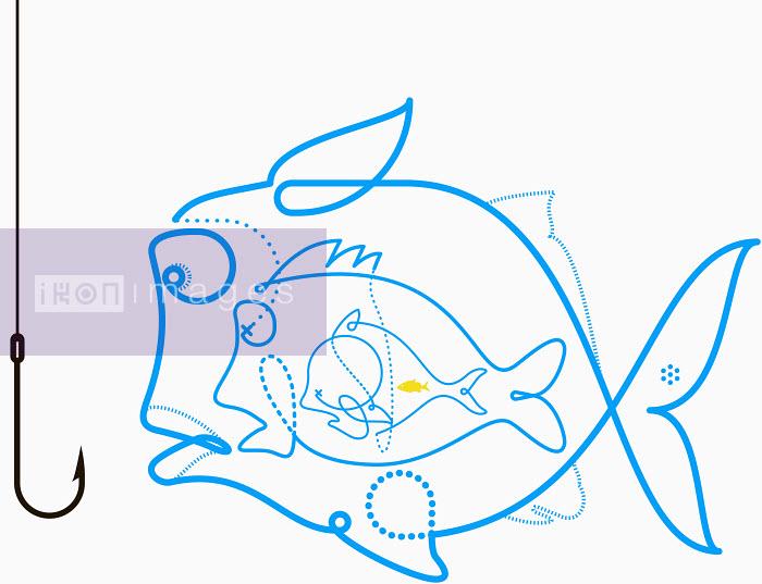 Fish looking at fish hook - Fish looking at fish hook - Will Scobie