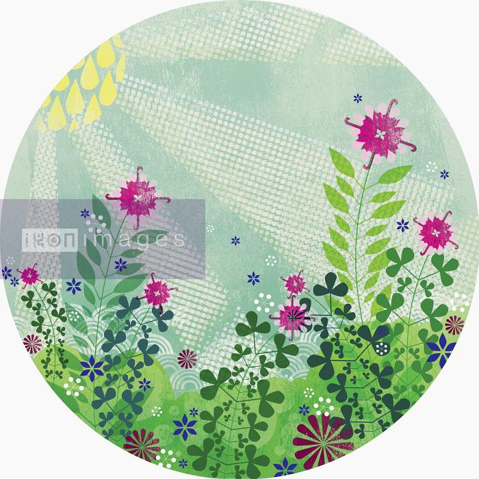 Sun shining on summer flowers in meadow - Sun shining on summer flowers in meadow - Yee Ting Kuit