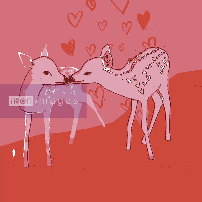 Deer kissing - Deer kissing - Christine Hawthorn