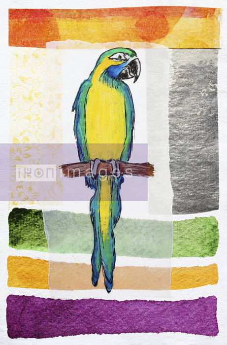 Stephanie Levy - Parrot on perch