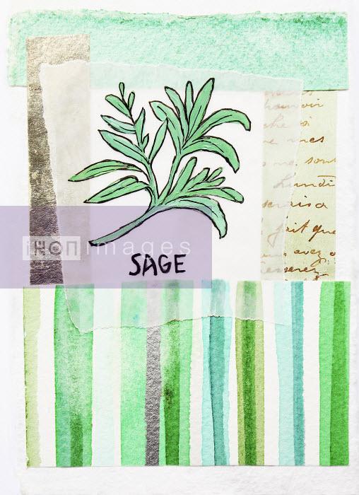 Stephanie Levy - Sage
