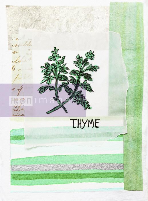 Stephanie Levy - Thyme