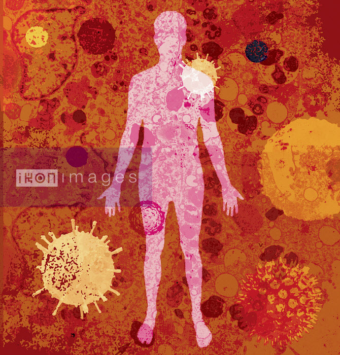 The human body with lots of different viruses - The human body with lots of different viruses - Lee Woodgate