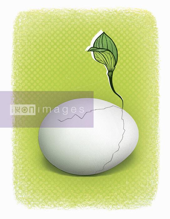 Seedling growing from cracked egg - Seedling growing from cracked egg - Lizzie Roberts