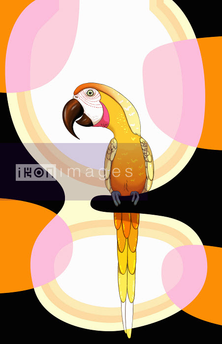 Andy Ward - Parrot on perch with abstract pattern background