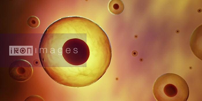 Illustration of human embryonic stem cells - Illustration of human embryonic stem cells - Ian Cuming