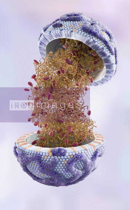 Digitally generated image of high density lipoprotein - Ian Cuming