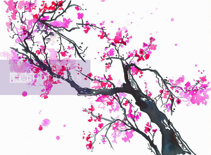 Branch of bright pink spring blossom - Branch of bright pink spring blossom - Jessica Durrant