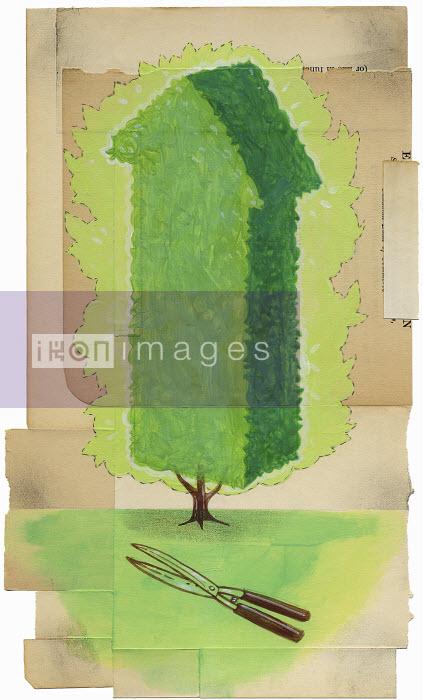Tree pruned into arrow shape pointing upward - Tree pruned into arrow shape pointing upward - Leigh Wells