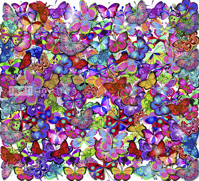 Ornate intricate multicolored butterfly pattern - Ornate intricate multicolored butterfly pattern - Coral Hernandez Finol