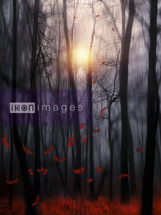 Sun shining behind trees with falling red autumn leaves in atmospheric woods - Sun shining behind trees with falling red autumn leaves in atmospheric woods - Viviana Gonzalez