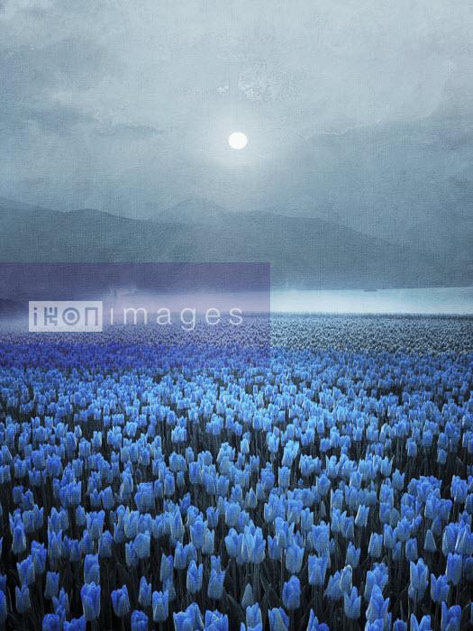 Atmospheric field of blue tulips in mountain landscape in moonlight - Atmospheric field of blue tulips in mountain landscape in moonlight - Viviana Gonzalez