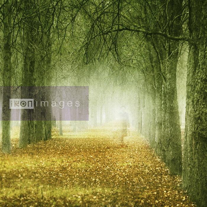 Transparent figure of woman walking through autumn trees and leaves - Transparent figure of woman walking through autumn trees and leaves - Viviana Gonzalez