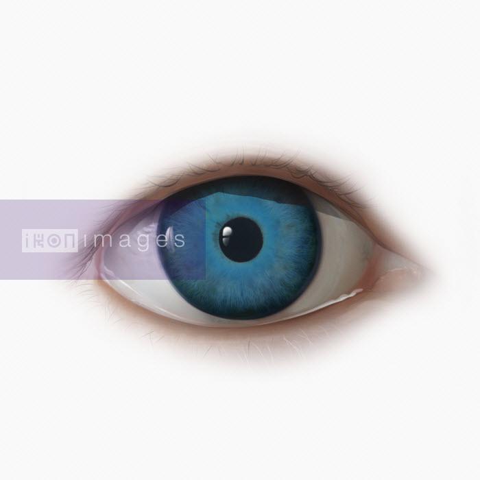 Close up of blue eye - Derek Bacon