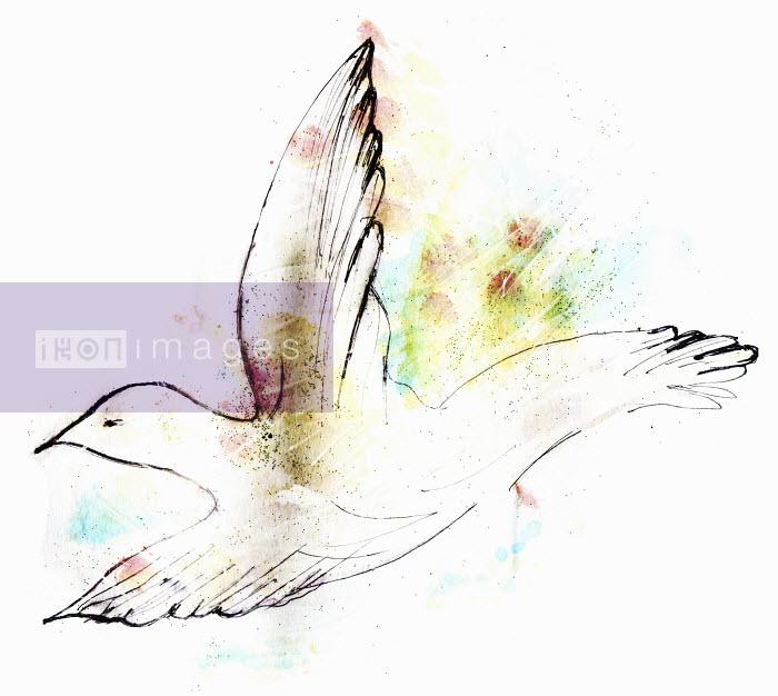 White peace dove flying - White peace dove flying - Lucia Emanuela Curzi