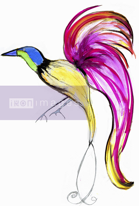 Bright, colorful bird of paradise - Bright, colorful bird of paradise - Lucia Emanuela Curzi