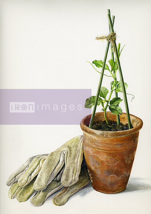 Close up of gardening gloves and seedling in plant pot - Close up of gardening gloves and seedling in plant pot - Rosie Sanders