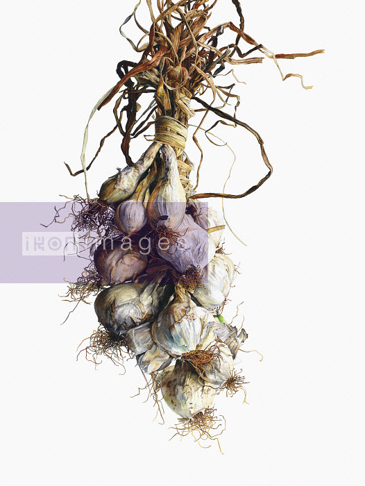 Picture 011 - Watercolor painting of white onions hanging in string - Rosie Sanders